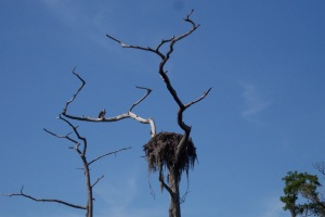 Moss bird nest.