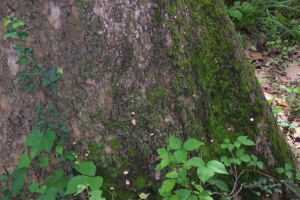 Moss on trunk.