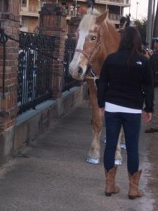 Even horses get a mani and pedi for Mardi Gras.